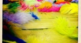 edance feathers